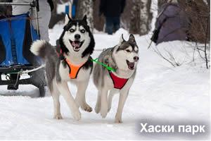 Такси Мурманск - Хаски Парк